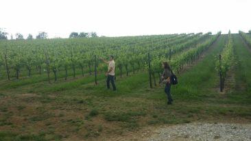 Mauro Altini e Sara Donnini camminando in vigna