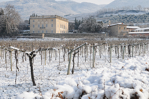Valpolicella-Vinyeards-Bottom